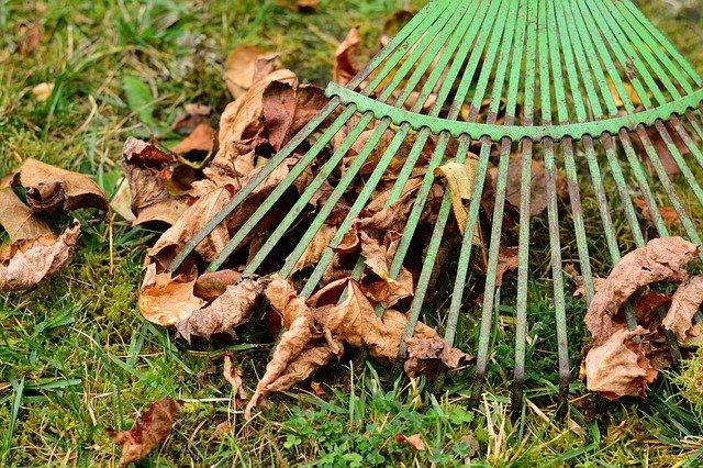 hrávě na listí