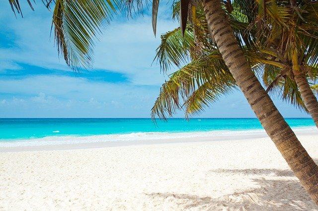 palmy na pobřeží